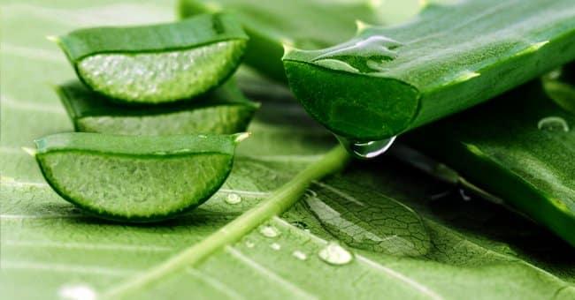 Utilisation de l'Aloe Vera pour une peau lisse et impeccable - Santé Peau  Noir