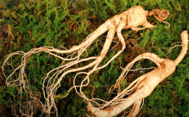 Quelles herbes africaines peuvent augmenter la taille du pénis et ...